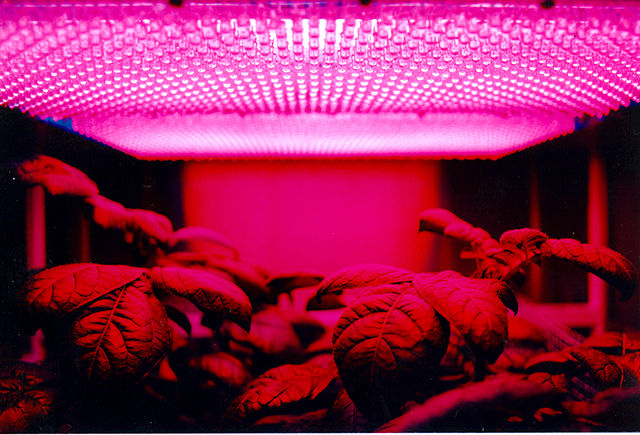 led grow light in an indoor garden